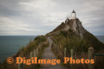 Nugget Point 0638