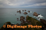 Nugget Point 0652